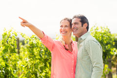 Happy couple standing in vineyard and pointing at nature. On a sunny day Stock Image