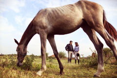 Happy couple with their horse Stock Images
