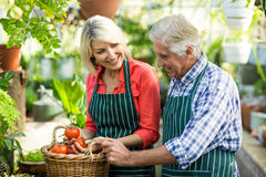 Happy couple with tomatoes at greenhouse Stock Photo