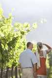 Happy Couple In Vineyard Royalty Free Stock Photography