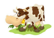 Happy cow eating grass. Cartoon cow eating grass on the field Royalty Free Stock Photography