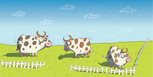 Happy Cows on Grassland. Illustration is in eps10  mode Royalty Free Stock Image