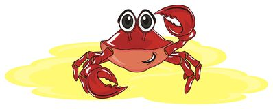 Crab in summer vacation Royalty Free Stock Photo