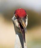 Happy crane royalty free stock photo