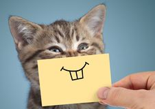 Happy crazy cat portrait with funny smile on blue background stock photography
