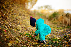Happy cute boy with autumn leaves in the park - copyspace. Happy cute boy with autumn leaves in the park Royalty Free Stock Image