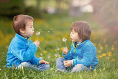 Happy cute caucasian boys, blowing dandelion outdoors in spring Royalty Free Stock Photos