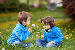 Happy cute caucasian boys, blowing dandelion outdoors in spring Stock Photos
