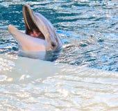 Happy cute dolphin stock photo