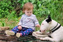 Happy cute female baby and dog is sitting in garden. Child is playing with English Bull Terrier white dog outside in park. Royalty Free Stock Photography