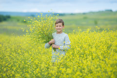 Happy cute handsome little kid boy on green grass lawn with blooming yellow dandelion flowers on sunny spring or summer day. Littl Royalty Free Stock Image