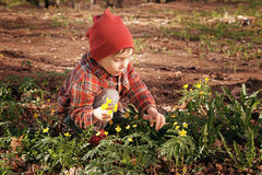 Happy cute little baby on a green grass lawn with blooming yellow flowers on a sunny spring or summer day. A child. Playing among the pines. A little boy dreams Royalty Free Stock Photos