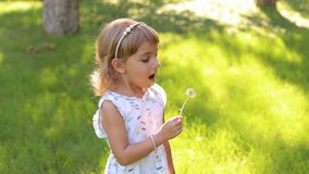 Happy cute little girl blowing on dandelion flower in summer day. Happy child blowing dandelion flower outdoors. Girl having fun in spring park. Sunny portrait stock video
