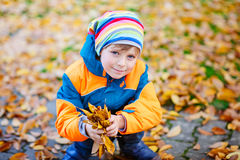 Happy cute little kid boy with autumn leaves playing in garden Royalty Free Stock Photography