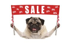 Happy cute pug puppy dog holding up red promotional  banner sign with text sale % off. Isolated on white background Stock Photography