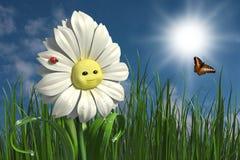 Happy daisy Stock Photos