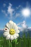 Happy daisy stock illustration