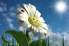 Happy daisy Stock Photography