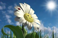 Happy daisy stock photography