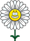 Happy Daisy Royalty Free Stock Image