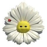 Happy daisy Stock Photos