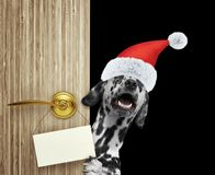 Happy dalmatian dog in red christmas santa claus hat looking out the door entrance at home with empty card. Isolated on stock images