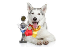 Happy dog with a cup Stock Image