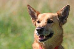 Happy Dog stock image