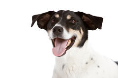 Happy dog Royalty Free Stock Photos