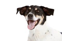 Happy dog royalty free stock photos
