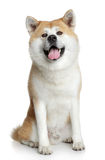 Happy dog Royalty Free Stock Photo