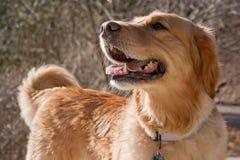 Happy Dog Stock Photos