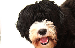 Happy dog. Happy bobtail play with the plastic orange bone Royalty Free Stock Photo
