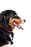 Happy dog Stock Images