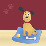 Happy dog. A young dog is sitting near his toys in a room with light yellow floor and red walls Stock Photography