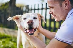 Happy Dog And His Owner Stock Photos