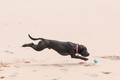 Happy dog with ball Royalty Free Stock Photography