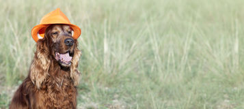 Happy dog banner Stock Images