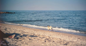 Happy Dog. On the Beach Royalty Free Stock Photo