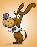 Happy dog with bone Royalty Free Stock Image