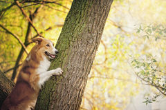 Happy dog border collie at the tree Royalty Free Stock Images