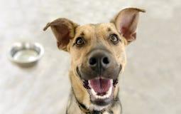 Happy Dog Bowl Royalty Free Stock Images