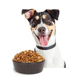 Happy Dog With Bowl of Kibble Dog Food Royalty Free Stock Photo