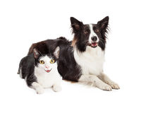 Happy Dog and Cat Laying Together Royalty Free Stock Photos