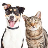 Happy Dog and Cat Together Closeup. Closeup of a happy and smiling tabby cat and mixed breed dog looking forward into the camera Royalty Free Stock Photography