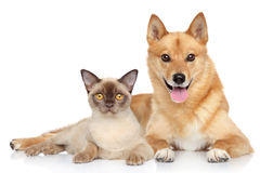 Happy dog and cat together Stock Images