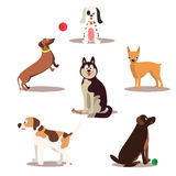 Happy dog  characters on white background. Dogs standing and sitting. Royalty Free Stock Image
