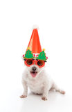 Happy Dog Christmas Party. A happy dog wearing comical Christmas glasses and party hat Royalty Free Stock Image