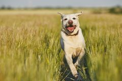Happy dog in countryside Stock Image