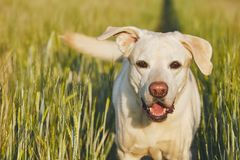 Happy dog in countryside Royalty Free Stock Images